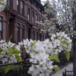 Spring hits Park Slope