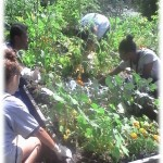 Volunteer/Training Opportunity at Community Gardens