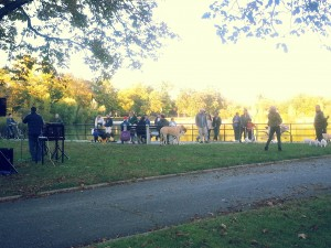 Kissena Park - come for the foliage, stay for the puppies and bonus jam sessions.