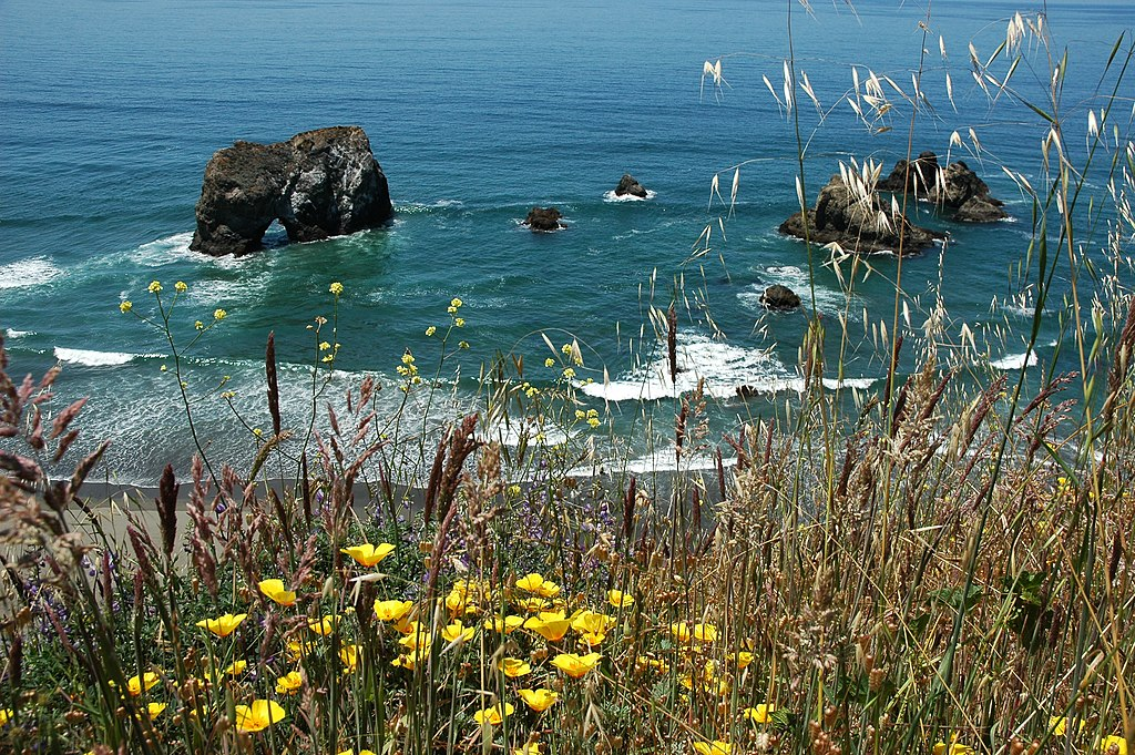 Image of ocean with flowers in the foreground.