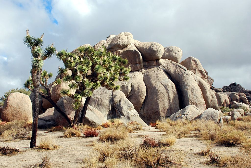 Image of rocks and and trees at Joshua Tree Park.