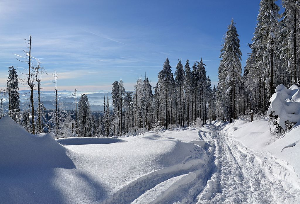 Image of snowy landscape with pine trees.