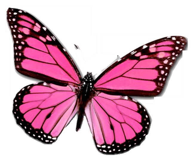 » Symmetry in Butterflies Symmetries