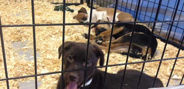"""Best Friends Animal Rescue's """"Super Adoption Event"""" Finds Homes for Over 200 Pets"""