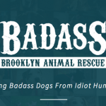 Simple Steps to Adopting a Dog at Badass Brooklyn Animal Rescue's Super Adoption Event